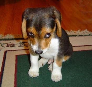 [Image: puppy-dog-eyes.jpeg]